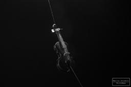 violoino nero